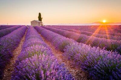 Фотообои Валенсоль, Прованс, Франция. Поле лаванды полный фиолетовые цветы