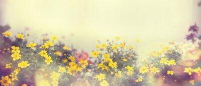 Фотообои Различные красочные весенние цветы в солнечном свете, размытие, баннер для веб-сайта, границы