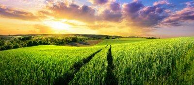Фотообои Обширное зеленое поле на великолепном закате, красочный панорамный пейзаж