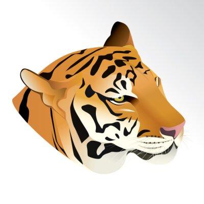 Фотообои Векторные иллюстрации головы тигра портрет на белом фоне.