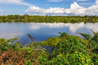 Фотообои Вид на озеро в тропических лесов Амазонки, Манаус, Бразилия