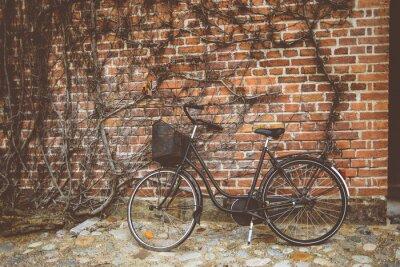 Фотообои Урожай велосипед опираясь на стену