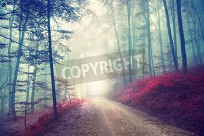 Фотообои Винтаж цветового эффекта осенней лесной дороге с фэнтезийным светом. Используется эффект винтажного фильтра.