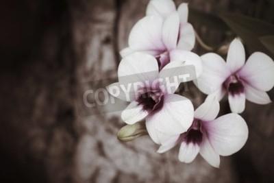 Фотообои Винтажные цветы орхидеи