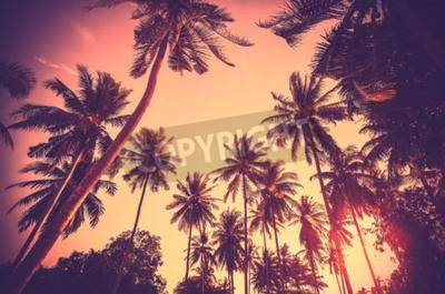 Фотообои Урожай тонированные праздник фон из пальмовых деревьев силуэты на закате.