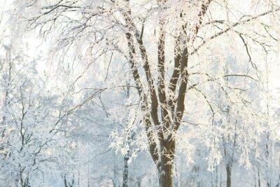 Фотообои Обои деревья с матовыми ветвей деревьев в зимний день