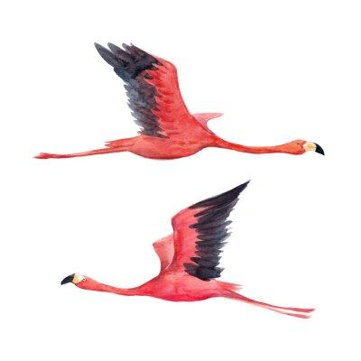 Фотообои Иллюстрация акварельного фламинго