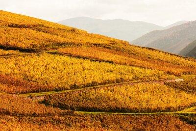 Фотообои виноградники