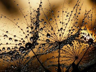 Фотообои мокрый одуванчик семян