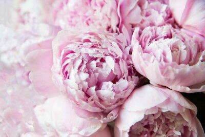 Фотообои White and pink peonies. Background, wallpaper..