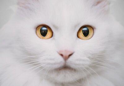 Фотообои белый кот