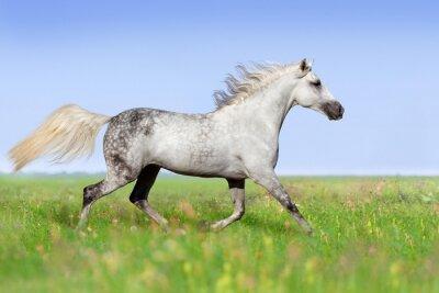 Фотообои Белая лошадь рысью на лето луг