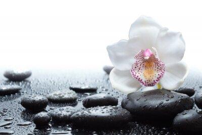 Фотообои белые орхидеи и влажные черные камни