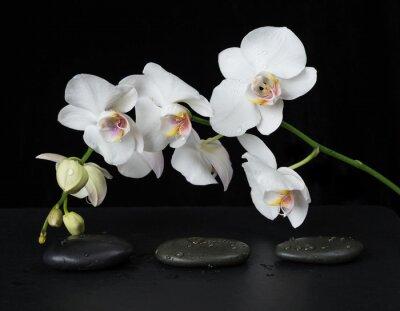 Фотообои Белая орхидея на черном фоне