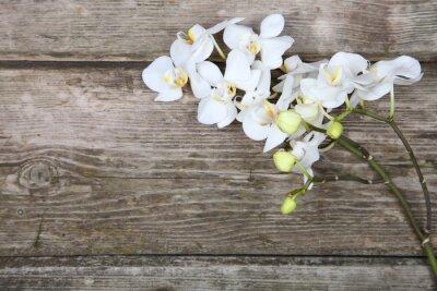 Фотообои Белая орхидея (фаленопсис)