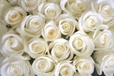Фотообои фон Белые розы