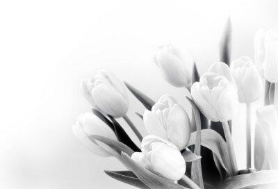 Фотообои Белые тюльпаны на белом фоне