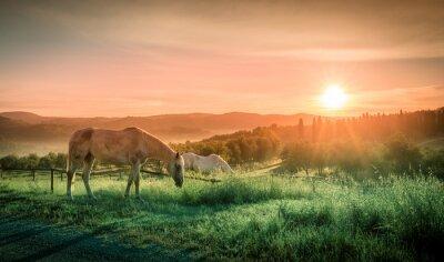 Фотообои Дикие лошади и тосканский восхода солнца