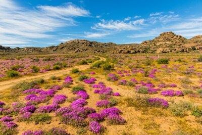 Фотообои Wildblumen в Südafrika