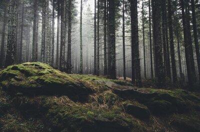 Фотообои Дикая природа пейзаж лес с соснами и мха на скалах