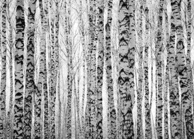 Фотообои Зима стволы берез
