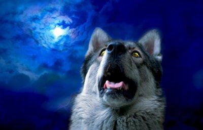 Фотообои Волк / Wolf в ночное время, выберите фокус на глазах. Цифровая ретушь.