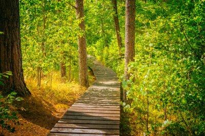 Фотообои Деревянный путь в лесу