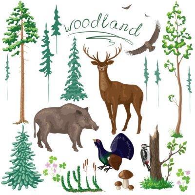 Фотообои Лесного растения и животные указан