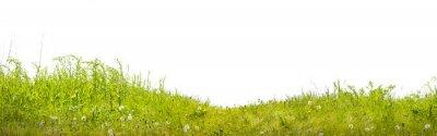 Фотообои земля с зеленой травой на белом фоне
