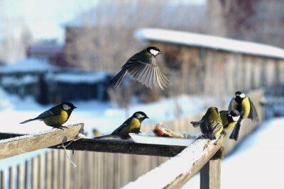 Фотообои птица синица зима кормушка много