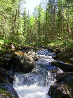 Фотообои Горная река в хвойных лесах, Горная река в хвойном лесу