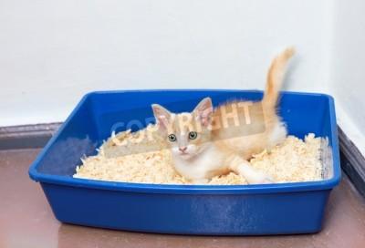 uses for cat litter