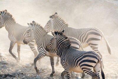 Фотообои Зебры бег, Намибию, африки