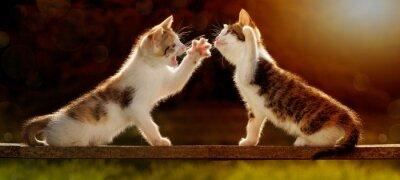 Фотообои Zwei Junge Katzen Spielen Ауф Айнем Holzbrett им Gegenlicht