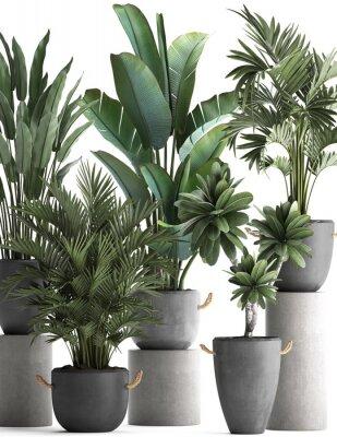 Плакат 3d illustration of tropical plants on white background