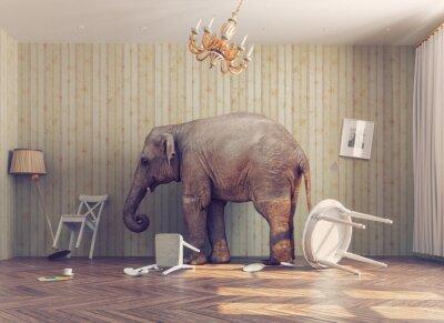 Плакат Слон в комнате