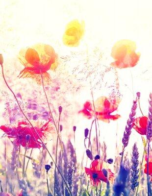 Плакат Абстрактные размытым фон природы, лето луг на рассвете.