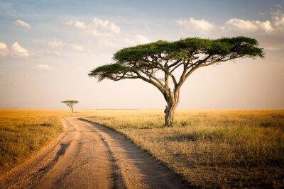 Плакат Африканский ландшафт - Танзания