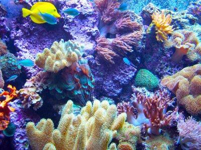 Плакат Barriera Кораллина 2