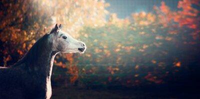 Плакат красивая арабская лошадь с белой головой на фоне красивой природы