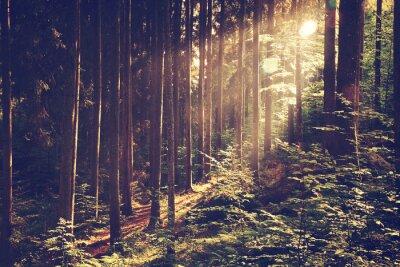 Плакат Красивая мечтательная лес