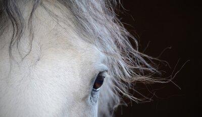 Плакат Красивые глаза белой лошади