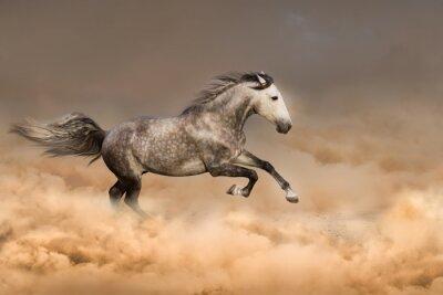 Плакат Красивая лошадь бежать галопом в пыли