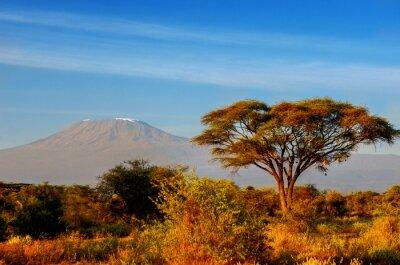 Плакат Beautiful Kilimanjaro mountain after sunrise in morning, Kenya,Amboseli national park, Africa