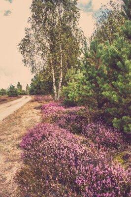 Плакат Красивый пейзаж леса с цветущими вереск по сельской дороге