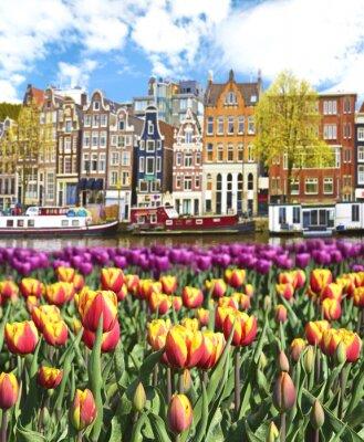 Плакат Красивый пейзаж с тюльпанами и домов в Амстердаме, Голландия