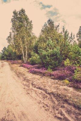 Плакат Красивый сельский пейзаж с цветущими вереск