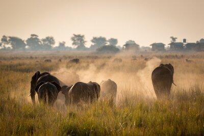 Плакат Красивая Дикая жизнь в Национальный парк Чобе, Ботсвана