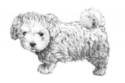 Плакат черный и белый рисованной щенок картина, очаровательны щенок эскиз на белом фоне для ветеринара, уход за домашними животными салон, ветеринар уходу за домашними животными или зоомагазина клип визитная