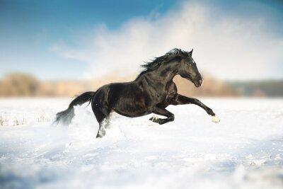 Плакат Черная лошадь бежать в снегу